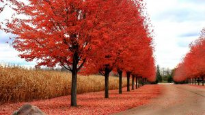 fall_leaves_wisconsin_worldvia