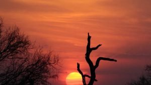 Sunset_Kruger_Park_Worldvia